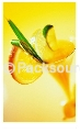 果汁香料整廠設備