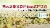 推廣商品/消費性  >  探索新疆吐魯番葡萄乾/提子